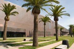 De Young Museum palmen van DE Stock Afbeeldingen