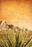 De Yucca van Mojave met Textuur Stock Afbeeldingen