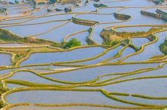 De yunnan terrassen van de rijst van yuanyang, China Stock Fotografie