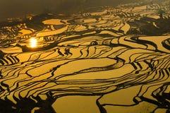 De yunnan terrassen van de rijst van yuanyang, China Stock Afbeeldingen