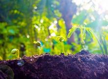 De zaadinstallaties groeien Zij groeien stap voor stap Stock Foto's