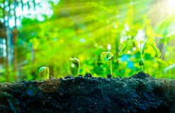 De zaadinstallaties groeien Zij groeien stap voor stap Stock Foto