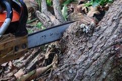 De zaag die het hout snijden Stock Afbeeldingen