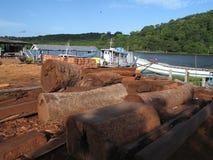 De zaag van Amazonië Stock Foto's