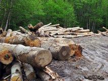 De zaag van het hout die van bos wordt gesneden royalty-vrije stock afbeelding