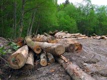 De zaag van het hout die van bos wordt gesneden royalty-vrije stock fotografie