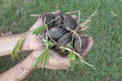 De Zaailing van de handholding van de Palm van de Palmvossestaart stock fotografie