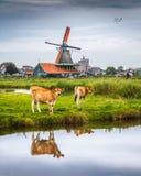 De Zaanse Schans. In Zaandam, just north of Amsterdam Royalty Free Stock Photo