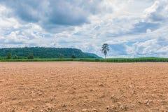 De zachte nadruk het ploegen, bebouwing, het plukken, bebouwing, het planten, cultuur, voor landbouwgebied, het suikerriet, Sacch stock foto
