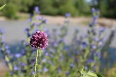 De zachte purpere bloemen werden verloren in het lange gras stock afbeelding