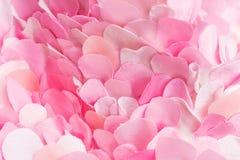 De zachte samenstelling van de lente textiel roze bloemblaadjes Stock Afbeelding