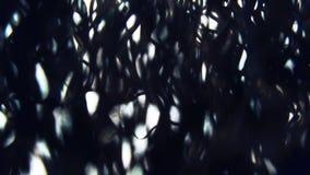 De zachte zonstralen glanzen door van de de naaldenlucht van de pijnboomboom nadruk van het de motierek de macro dichte omhoog la stock videobeelden