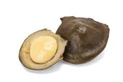De zaden van Archidendronjiringa Stock Afbeelding
