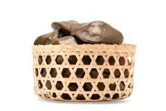 De zaden van Archidendronjiringa Stock Afbeeldingen