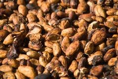 De zaden van de cacao stock fotografie