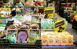 De zaden van de cannabis stock foto