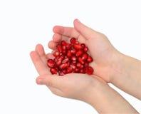 De zaden van de granaatappel in handen Stock Fotografie