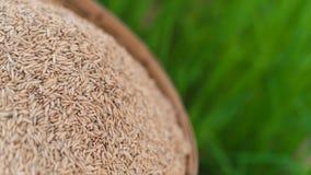 De zaden van de jasmijnrijst in bamboemand met het groene gebied van de rijstinstallatie stock afbeeldingen