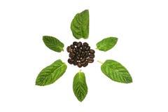 De zaden van de koffie met doorbladert royalty-vrije stock afbeelding