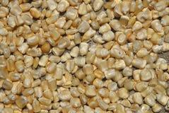 De zaden van de maïs Stock Foto's