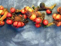 De zaden van de magnolia stock foto's