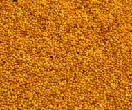 De zaden van de mosterd Stock Afbeeldingen