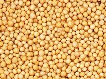 De Zaden van de mosterd Stock Fotografie