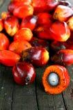 De Zaden van de Palm van de olie Royalty-vrije Stock Foto's