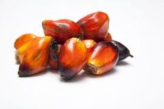 De Zaden van de palmolie Royalty-vrije Stock Foto's