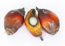 De zaden van de palmolie Royalty-vrije Stock Fotografie