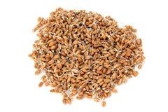 De zaden van de tarwe met spruiten stock afbeelding