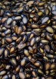De zaden van de watermeloen Royalty-vrije Stock Afbeelding