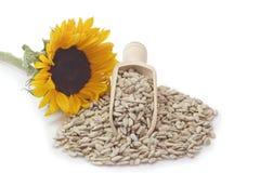 De zaden van de zonnebloem stock afbeelding