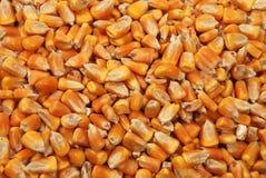 De zaden van het graan sluiten omhoog als achtergrond Royalty-vrije Stock Afbeeldingen
