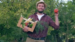 De zaken van het groentenhuis, knappe landbouwer houden een houten krat en een bio rode tomaat tijdens het oogsten op achtergrond stock videobeelden