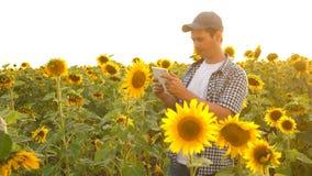 De zakenman op gebied analyseert hun inkomen de agronoom bestudeert gewas van een zonnebloem Een landbouwersmens werkt met een bi stock footage