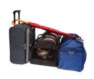 De zakken van de reis en huisdierencarrier Stock Fotografie
