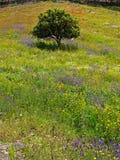 De zaligheid van de lente Stock Foto's