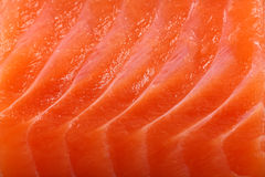 De zalm van de close-up Royalty-vrije Stock Foto's