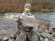 De zalmhucho die van Donau in Midden-Europa vissen royalty-vrije stock afbeelding
