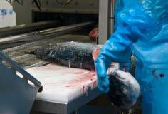 De zalmproductie van de vissenfabriek stock afbeeldingen