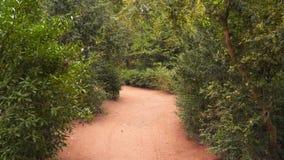 De zandige weg in het bos stock video