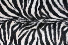 De Zebra van de textuur Royalty-vrije Stock Afbeelding