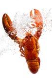 De zeekreeft in water Stock Foto's