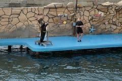 De zeeleeuw spreekt aan het publiek Stock Foto's
