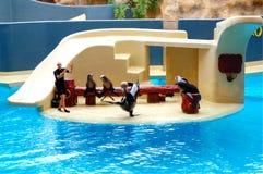 De zeeleeuwen tonen in Loro Parque Stock Fotografie