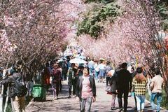 De Zeemeeuw en Sakura van China KunMing stock foto