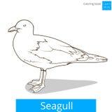 De zeemeeuw leert vogels kleurend boekvector stock illustratie