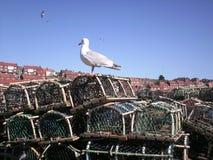 De zeemeeuw onderzoekt de vangst Stock Foto