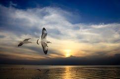De zeemeeuw spreidde de vleugels op donkerblauwe hemel uit Stock Foto